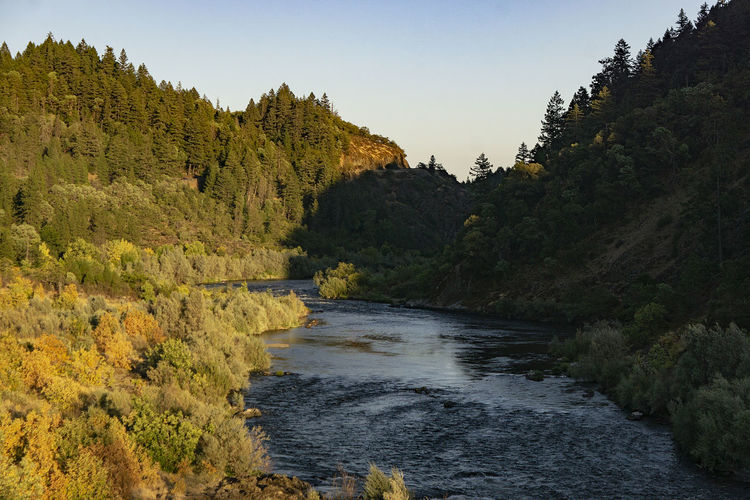 The Rogue River River Water Outdoors Nature Tree Beauty In Nature Scenics - Nature Tranquil Scene Tranquility No People Green Color Forest Flowing Water Clear Sky Plant Sky Growth Non-urban Scene Land Day Idyllic Flowing Oregon