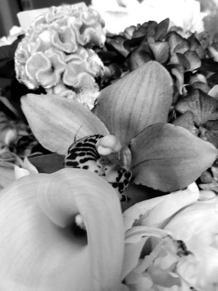 Black And White Friday Flower Flower Head Fragility Nature Beauty In Nature Close-up Growth No People Freshness S8plusphotography Cellphonephotography Justbecause Ynot Tranquility Beauty Reflection Freshness Day Beauty In Nature Indoors  Bouquet Growth Plant Nature