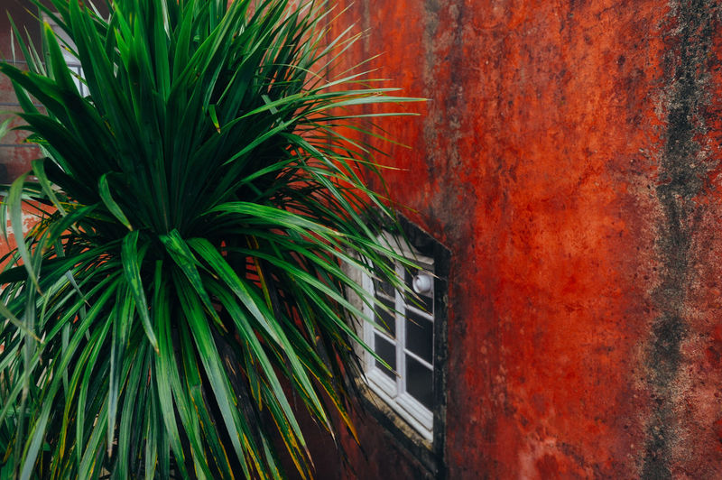 Red color wall with window and palm tree in Sintra, Portugal Architecture Backgrounds Built Structure Colorful Green Color Multi Colored Palm Tree Plant Portugal Red Sintra Tourism Traveling Tree Window