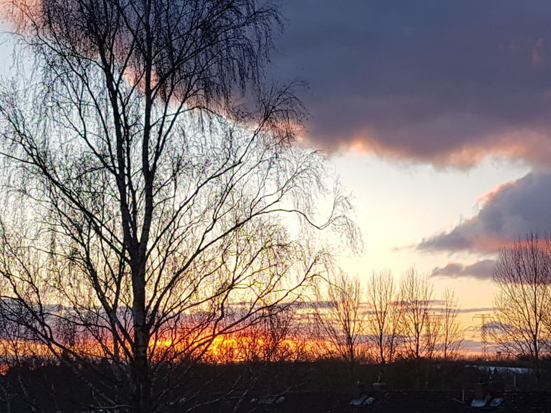 #ostholstein #schleswig-holstein Abendstimmung Abendrot Sunset Tree Silhouette Nature Sky Cloud - Sky Beauty In Nature