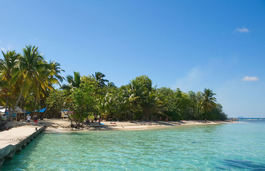 Ilet du Gosier - Gosier island - Le Gosier - Guadeloupe Caribbean island Antilles Beach Beauty In Nature Blue Caribbean Caribbean Sea Gosier Guadeloupe Island Le Gosier Nature Outdoors Palm Tree Sand Scenics Sea Sky Summer Tranquil Scene Tranquility Tree Tropical Tropical Climate Vacations Water