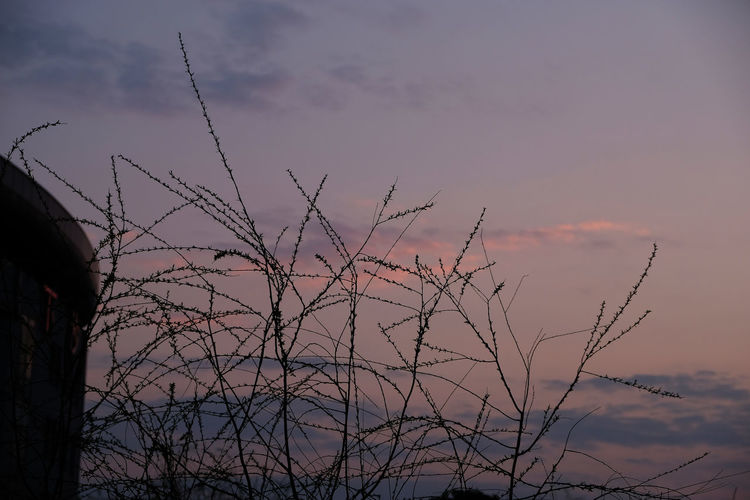 Branches and sunset clouds Bare Tree Beauty In Nature Cloud - Sky Day Low Angle View Nature No People Outdoors Scenics Silhouette Sky Sunset Tranquil Scene Tranquility