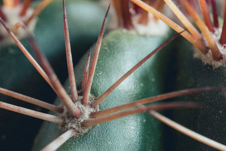 Close-up Focus On Foreground Plant Nature Cactus Green Color Succulent Plant Thorn Thorns Full Frame Macro Macro Photography Clump Cluster Extreme Close-up