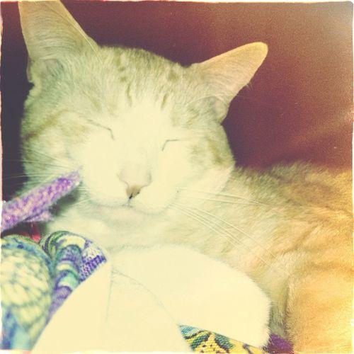 My ginger baby, Jedi. #kitty #cat #gingercat