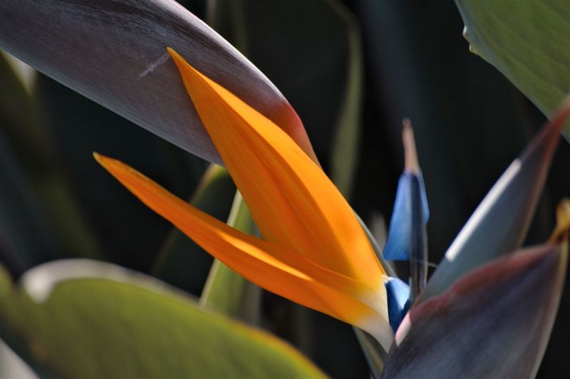 Flowering Plant Flower Plant Bird Of Paradise - Plant Growth Close-up Vulnerability  Fragility Freshness Beauty In Nature Petal Flower Head Inflorescence Plant Part No People Nature Leaf Day Focus On Foreground Outdoors