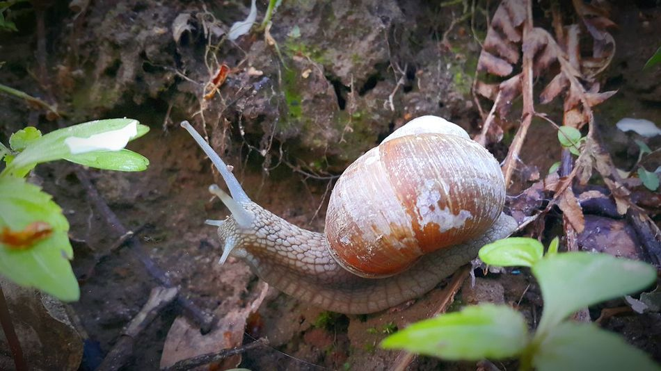 Nature Animals Beautiful Nature Nature_collection Popular Photos Nature Photography Macro Photography Mobile Photography Snail🐌 Snailfriend