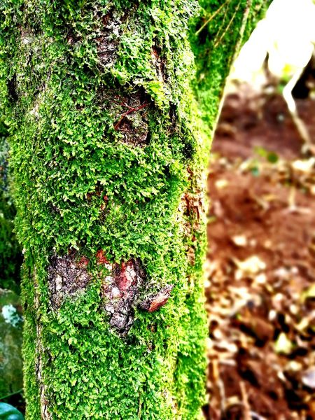 Nature Green Color Growth Close-up Outdoors Day Tree Musk Green Musk Textured  No People Tree Trunk Forest Trees Beauty In Nature Forest Photography in Montañas De Escazú San Jose, Costa Rica EyeEmNewHere