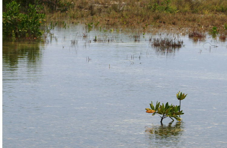 2010 Aquatic Plant Cayo Largo Cuba Day Lagune Nature No People Outdoors Plant Water