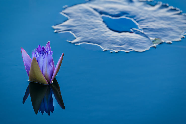 Bud Buddhist Flowers Lily Flower Lily Pads Lotus Flower Plant Water Water Plants Water Reflections