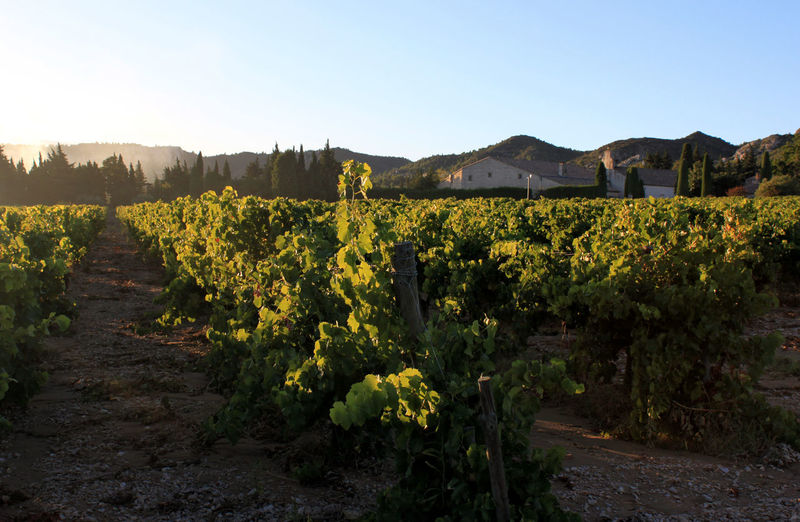 Agriculture Alpilles Field Landscape Nature Outdoors Provence Rural Scene Vine - Plant Vineyard Winemaking