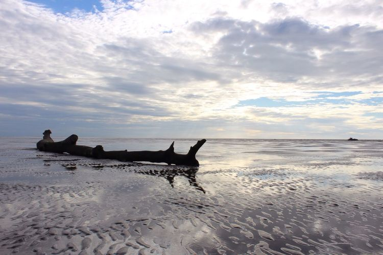 Drift wood at fairhaven beach against cloudy sky