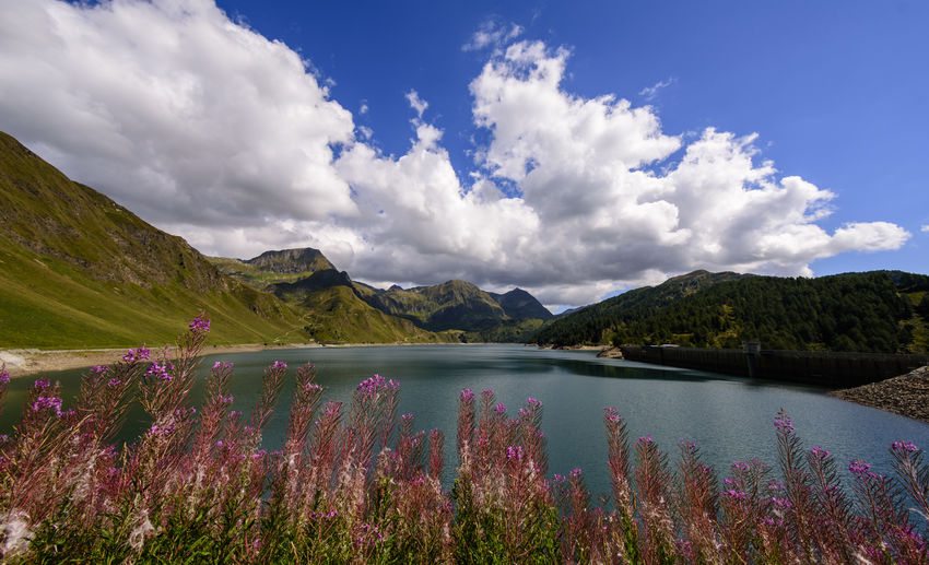 Ritom Beauty In Nature Cloud - Sky Day Flower Flowering Plant Growth Idyllic Lake Mountain Mountain Range Nature No People Non-urban Scene Outdoors Plant Purple Scenics - Nature Sky Tranquil Scene Tranquility Water My Best Travel Photo