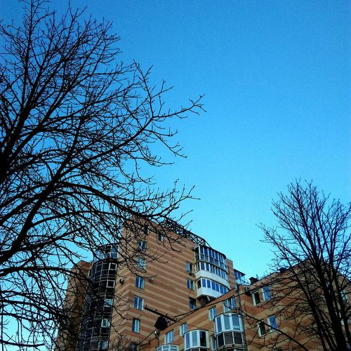 Voronezh Building Exterior Architecture Built Structure No People Low Angle View Bare Tree Sky Outdoors Clear Sky Day Tree Nature Voronezh Vrn Beautiful First Eyeem Photo