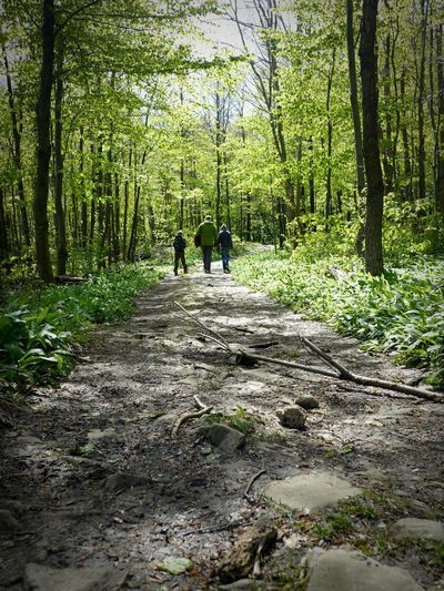 🌹 Nature Walking Togetherness Forest People Real People Forest Walking Family Forest Path Father Father And Son Three People Hands On Hands People In Love People Walking  Love Father Love Connected With Nature