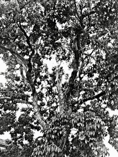 Ramas 6 Tree Branch Sky Flora Foliage
