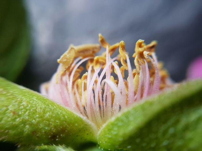 Pollen Stamen Leaf Macro Wild Rose Plant Part Pistil Flower Head Blooming