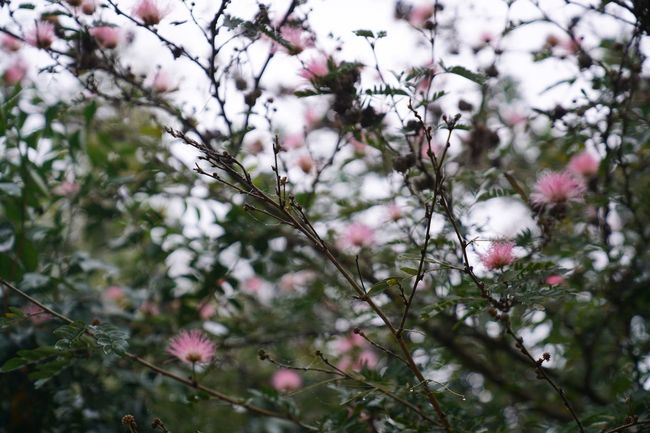 Growth Tree Fragility Nature Branch Flower Freshness Beauty In Nature Focus On Foreground Close-up Blossom Outdoors Springtime No People Flower Head