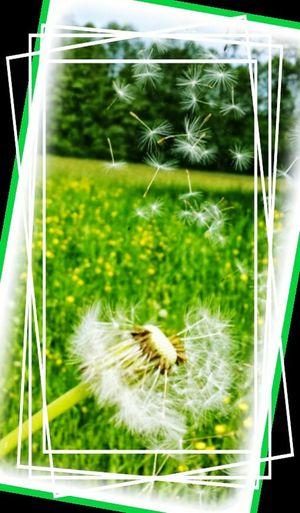 Enjoying Life Nature Flowers,Plants & Garden Nature Photography Flores, Bosques Y Naturaleza. Popular Photos Ascensión Del Señor