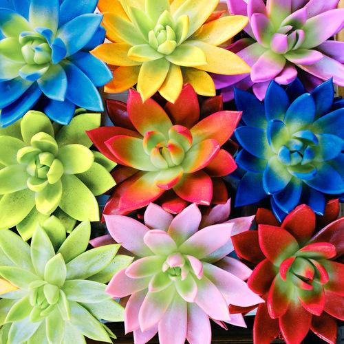 Full frame shot of multi colored flowering plant