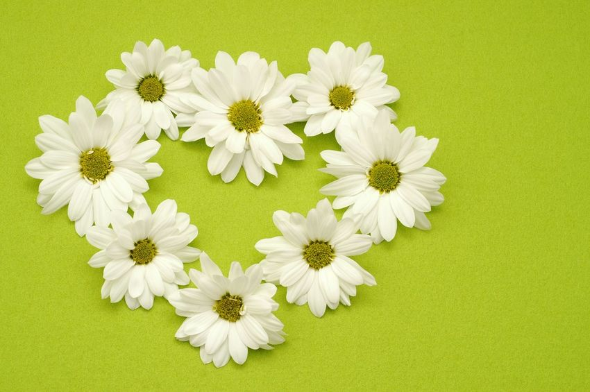 Cute heart made of white flowers on green Nobody High Angle View Flower Daisy Copy Space Fresh Valentine Heart Flowering Plant Flower Plant Freshness Daisy Beauty In Nature Flower Head White Color Green Color Fragility No People Vulnerability  Close-up Springtime Yellow Backgrounds