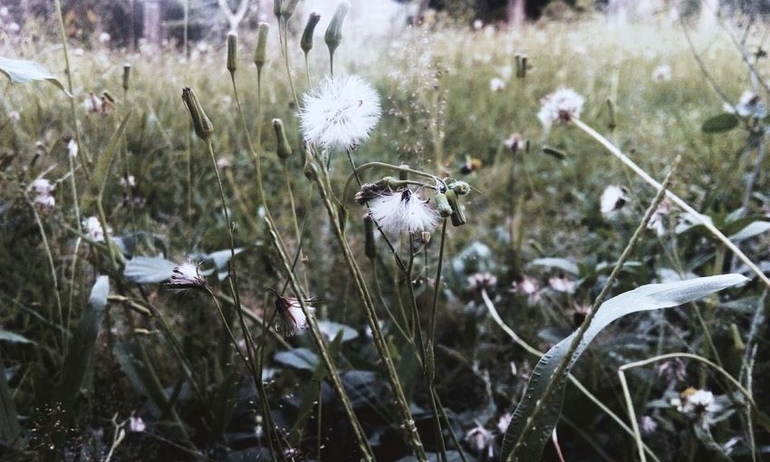 Nature Plant Growth Outdoors Day Beauty In Nature Winter Cold Temperature Close-up