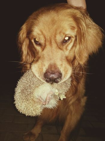 Hedgehog My Dogs Are Cooler Than Your Kids Check This Out I Love My Dog