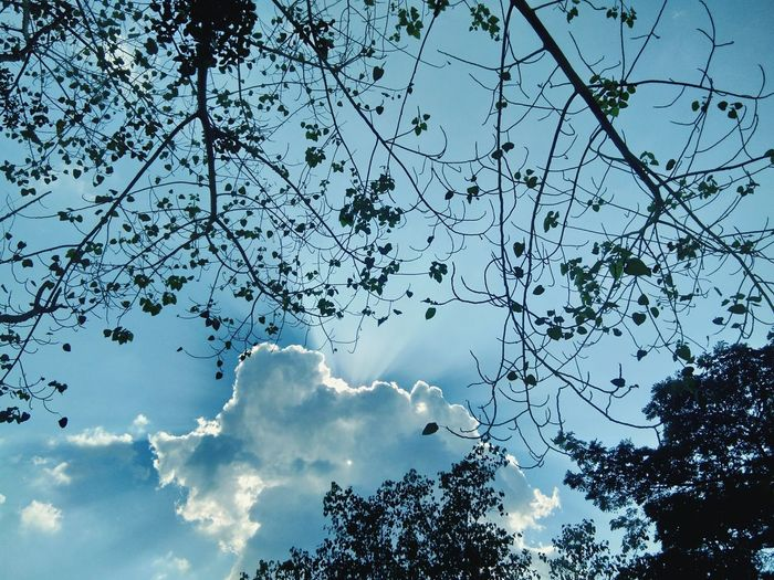 Tree Sky Nature Low Angle View Cloud - Sky Beauty In Nature Day Outdoors No People Branch Freshness Bird
