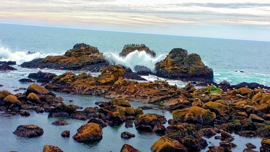 Seals on Rocks Salt Point Seals Rocks Boulders Sandstone Rugged Power Crashing Waves  Wind Spray Sea Spray Sea Ocean Dramatic Dramatic Sky Pink Distance Zen Copy Space Awe Inspiring Elegant Rewilding Walking Sea Beach Water Rock - Object Shore Horizon Over Water Nature Wave