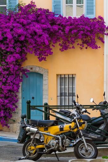 Summer in Provence. Hyeres. Architecture Blooming Bougainvillea Building Exterior City Colorful Colors Of Provence Côte D'Azur Flower France 🇫🇷 House Hyères In Front Of Multi Colored Outside Pink Color Provence Purple Residential Building Summer Look Yellow TakeoverContrast Adapted To The City