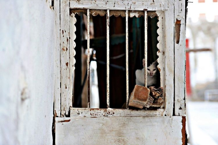 Cat at the Historic District in Jeddah Four Legs And A Tail A Frame Within A Frame The EyeEm Facebook Cover Challenge