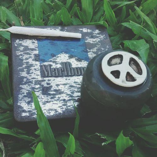 Weed Smoking Weed We Love Cannabis Marijuana