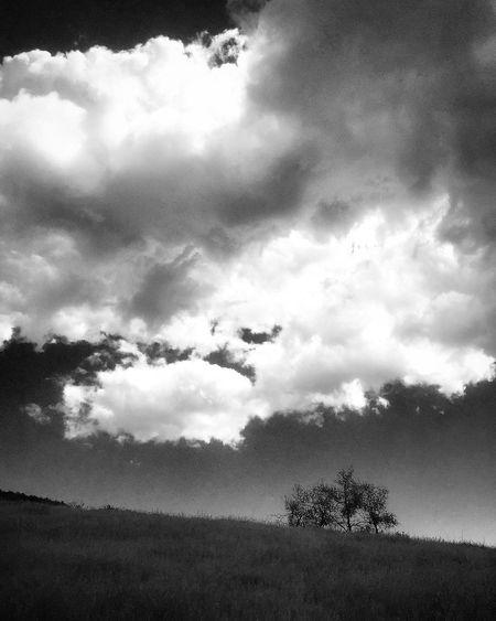 GraysForDays Tranquility Sky Idyllic Cloud - Sky Scenics Tranquil Scene Blackandwhite Nature Tree Landscape Landscape_photography Black And White Black & White Gray Cloudy Grass Field Hill Fieldscape