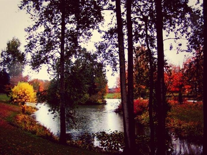 Colors Of Autumn at Lake Sacajawea in Longview, WA Pacific Northwest  Calm