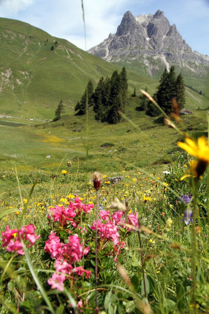 mountain, flower, nature, beauty in nature, mountain range, growth, day, animal themes, plant, outdoors, landscape, wildflower, one animal, scenics, no people, sky, freshness, grass, mammal