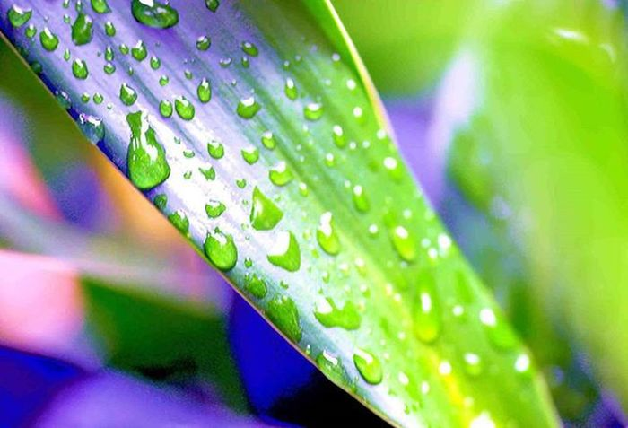 It was raining here. I see Waterdroplets on the Leaves of this outdoor plant 3) Tv_depthoffield 4) Nature_brilliance 5) Fotofanatics_nature_ 6) Natureandlife 7) Rsa_nature 8) Dof_addicts 9) Tgif_nature 0) Icu_waterdrops 1) Resourcemag 2) Macro_club 3) Macro_spotlight 4) Pocket_dof 5) Igglobalclubmacro 6) Jj_indetail 7) Splendid_dof 8) Macroandflora 9) 1001macro 0) Bns_macro 1) Best_macro 2) Photoflair_macro 3) Loves_united_macro 4) Macro_mood 5) Macro_holic 6) macro_sultans 7) my_daily_macro 8) macro_secrets 9) drops_perfection 0) my_daily_macro
