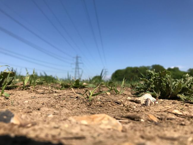 Land Sky Nature Sunlight Field Day Plant No People Clear Sky Cable Electricity  Selective Focus Landscape Electricity Pylon