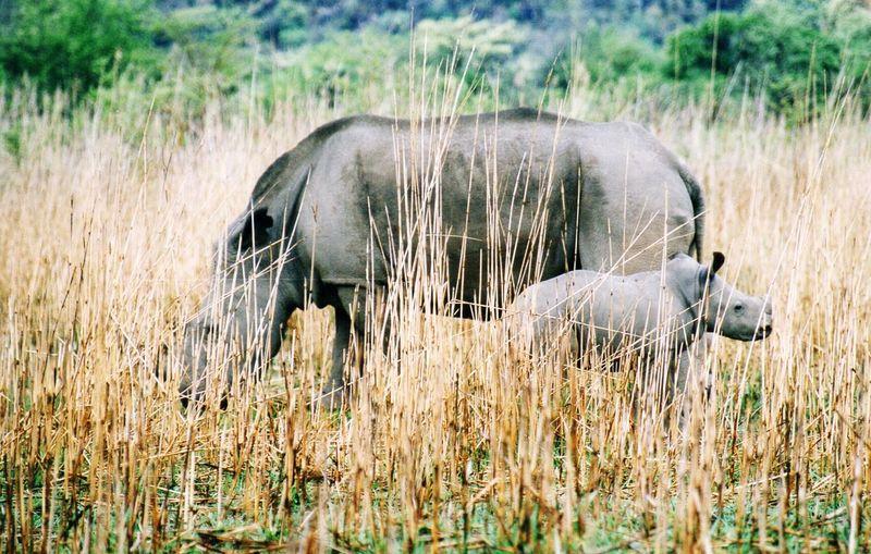 Matopos NP Zimbabwe