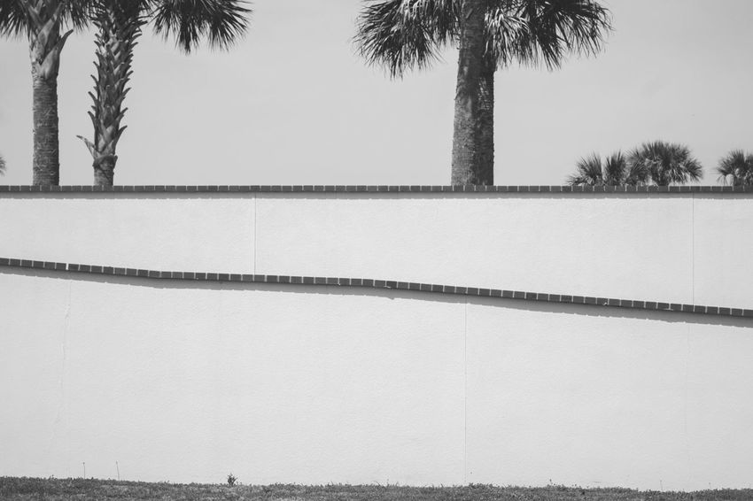 Blackandwhite Tree Plant Architecture Sky Built Structure Day Nature Palm Tree Tropical Climate No People Clear Sky Outdoors Wall - Building Feature Building Exterior Low Angle View Wall Tranquility