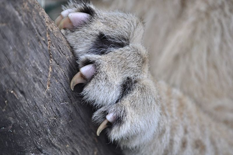 Cropped paw of lion climbing on tree trunk