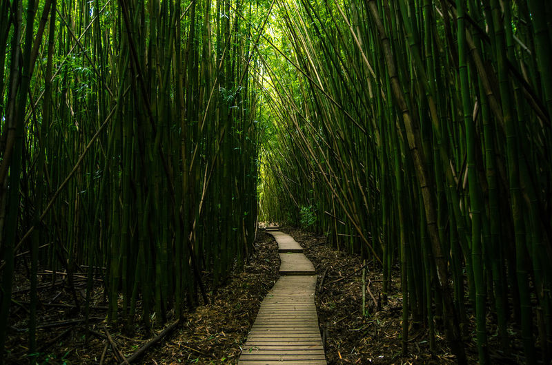 Bamboo - Plant Bamboo Grove Beauty In Nature Day Grass Green Color Growth Nature No People Outdoors The Way Forward Tranquility Water