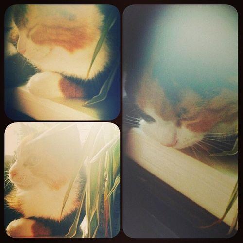 Ook Nada geniet van haar uitbuik momentje. Cat Kitten Sweet Scheetie love dutchgirl dutch girl loveher