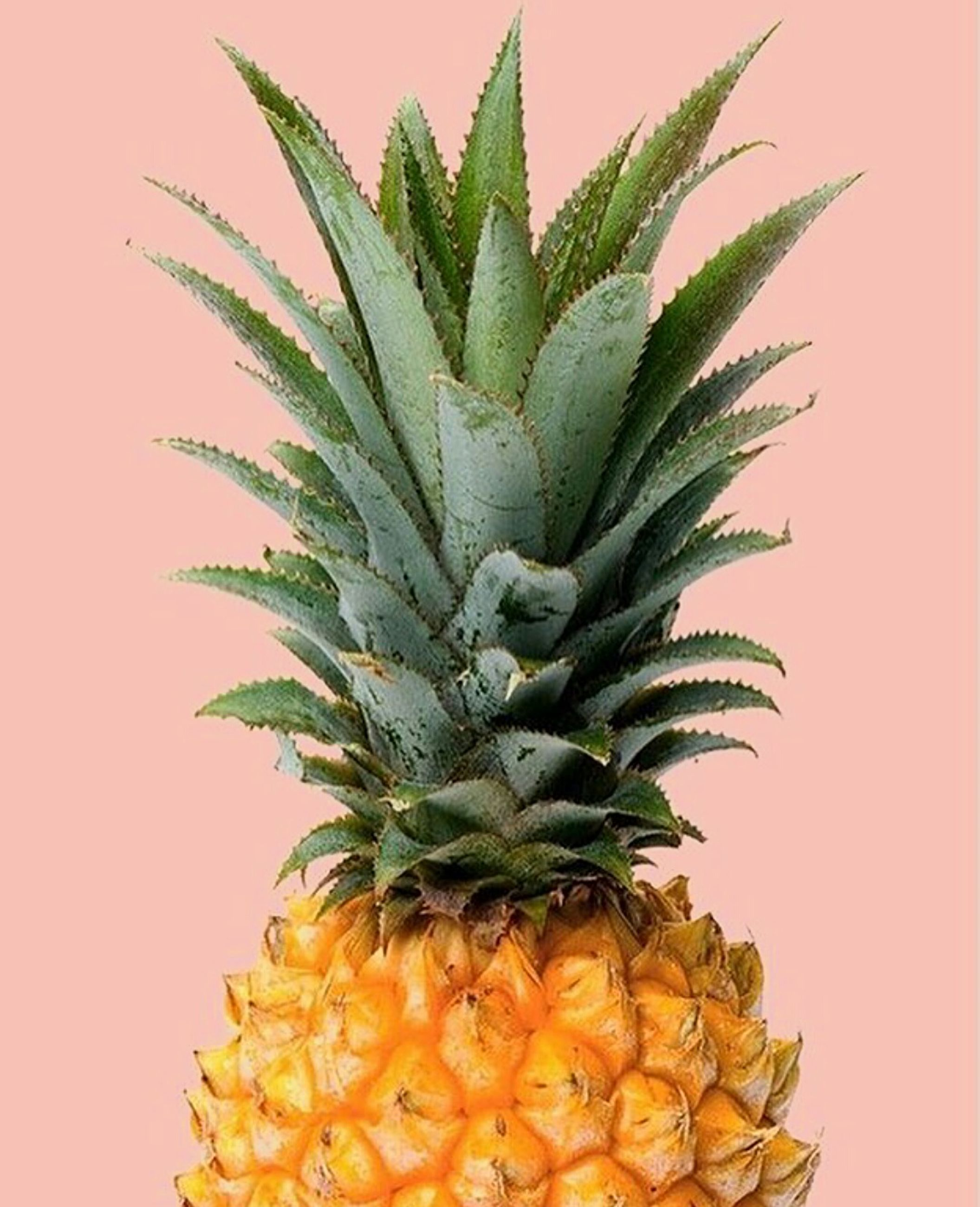 pineapple, freshness, food and drink, leaf, close-up, white background, growth, studio shot, variation, green color, houseplant, choice, nature, succulent plant, multi colored, large group of objects, retail, tropical tree