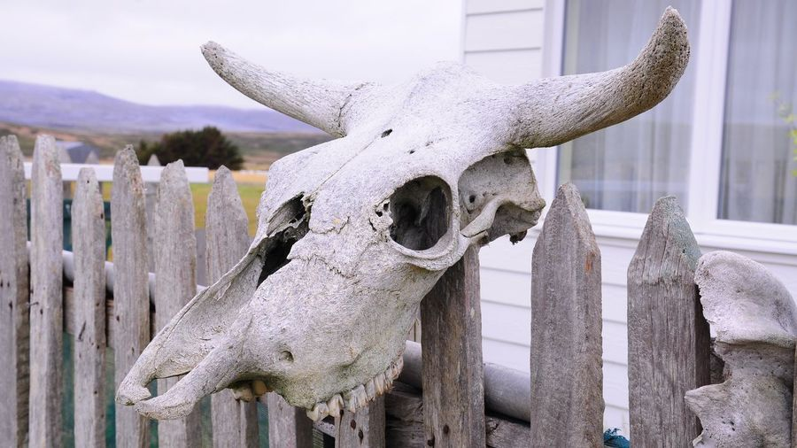 Close-up of animal skull on wooden post