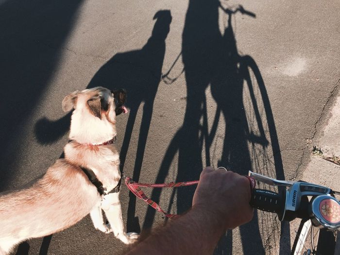 Low section of man riding bicycle with dog on road