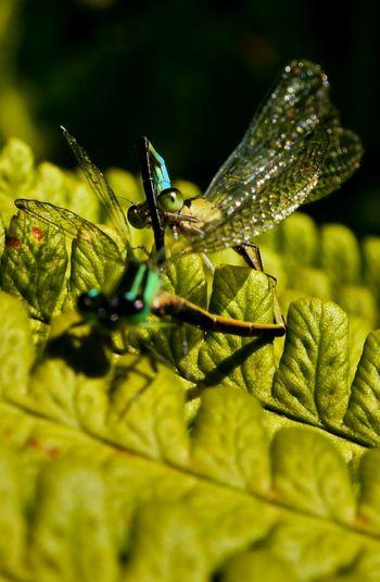 Taking Photos Libellule Photography Nature Sun Garden Shadow Macro Insect Green