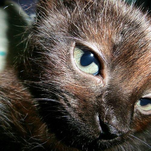 Oi, me chamo Zeca e sou um gato! ????