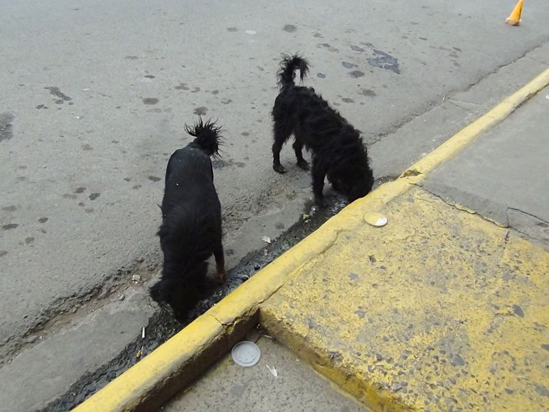 Scraps Urban Abandoned Abandoned Dog Street Photography Dogs On The Street Living On The Street Scavengers Two Dogs Hard Life Survival Living On The Streets Stray Dog Abandoned Pets Adapted To The City