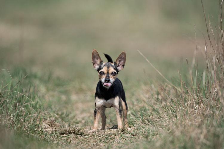 happy dog One