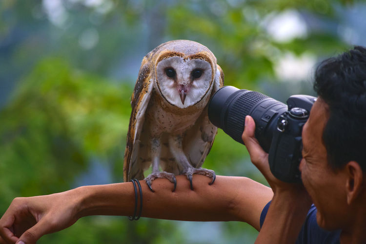 Close-up of man photographing owl