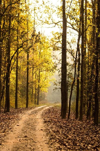 Yellow Yellow Leaves Forest Forest Path Kanha National Park Heaven Nature Nature_collection Nature Photography Nature_perfection Naturephotography Road To Heaven